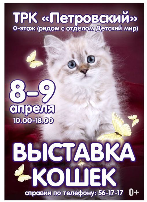 Изображение для новости Весенняя выставка кошек